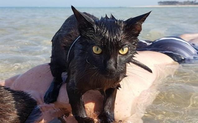Video: La gata playera que desafía los mitos felinos sobre el agua