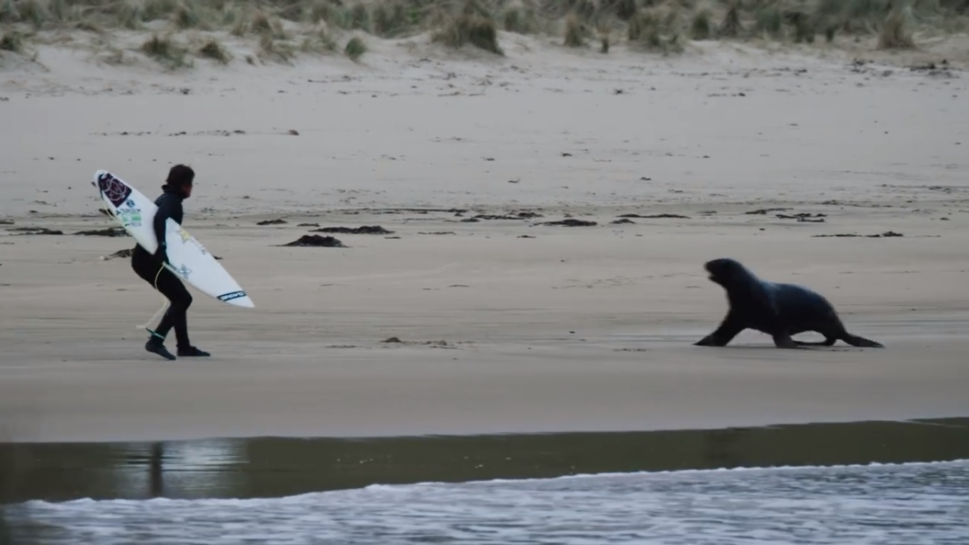 Albee Layer es perseguido por lobos marinos durante sesión de surf en Nueva Zelanda