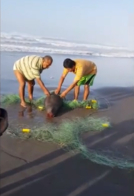Pescador es denunciado penalmente por asesinar a Lobo Marino