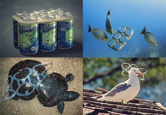 Crean aros de six pack biodegradables que los animales marinos pueden comer