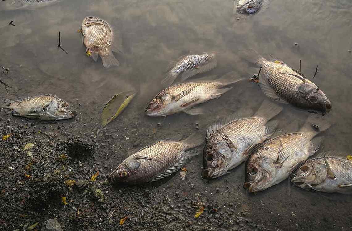 Aparición de cientos de peces muertos en Zorritos preocupa a la población
