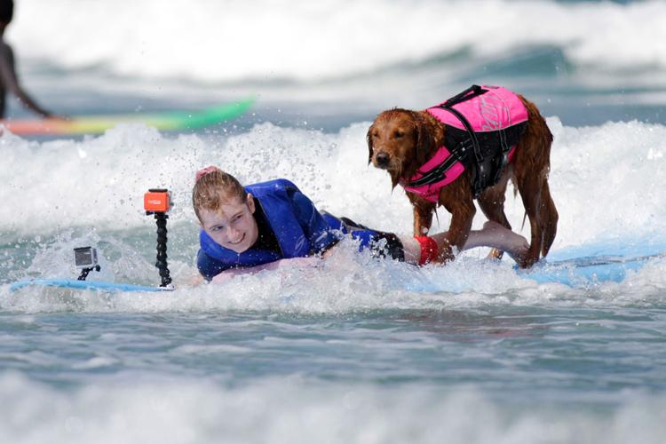 Este es el perro surfista que ayuda a niños con discapacidad y veteranos de guerra