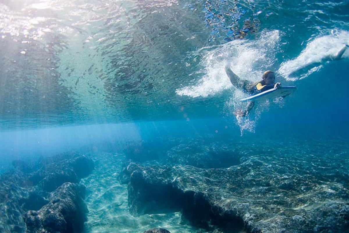 Especies marinas estarían protegiéndonos de los virus