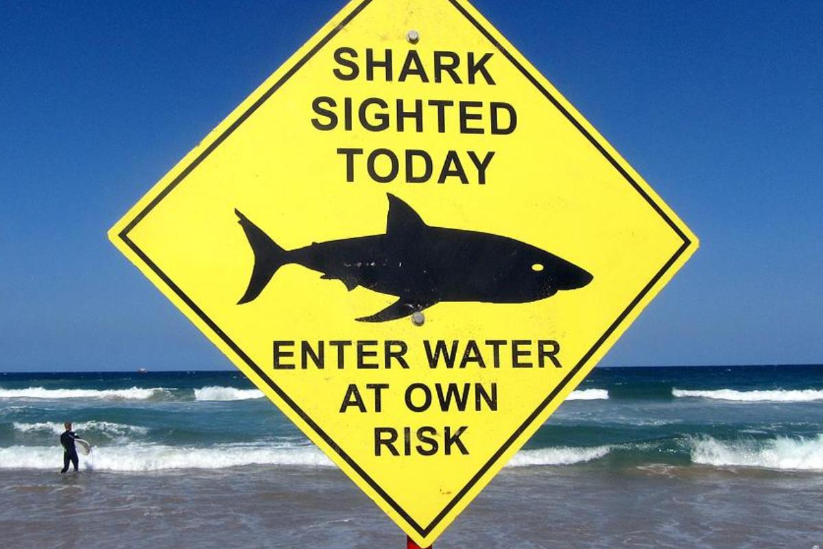 Surfer será procesado por justicia australiana tras activar boyas de alerta contra tiburones para surfear solo