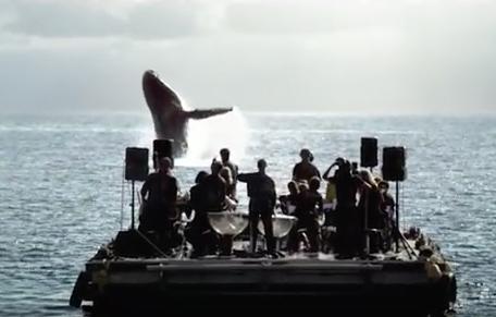 Para los amantes de las ballenas, éste video te dejará sin palabras