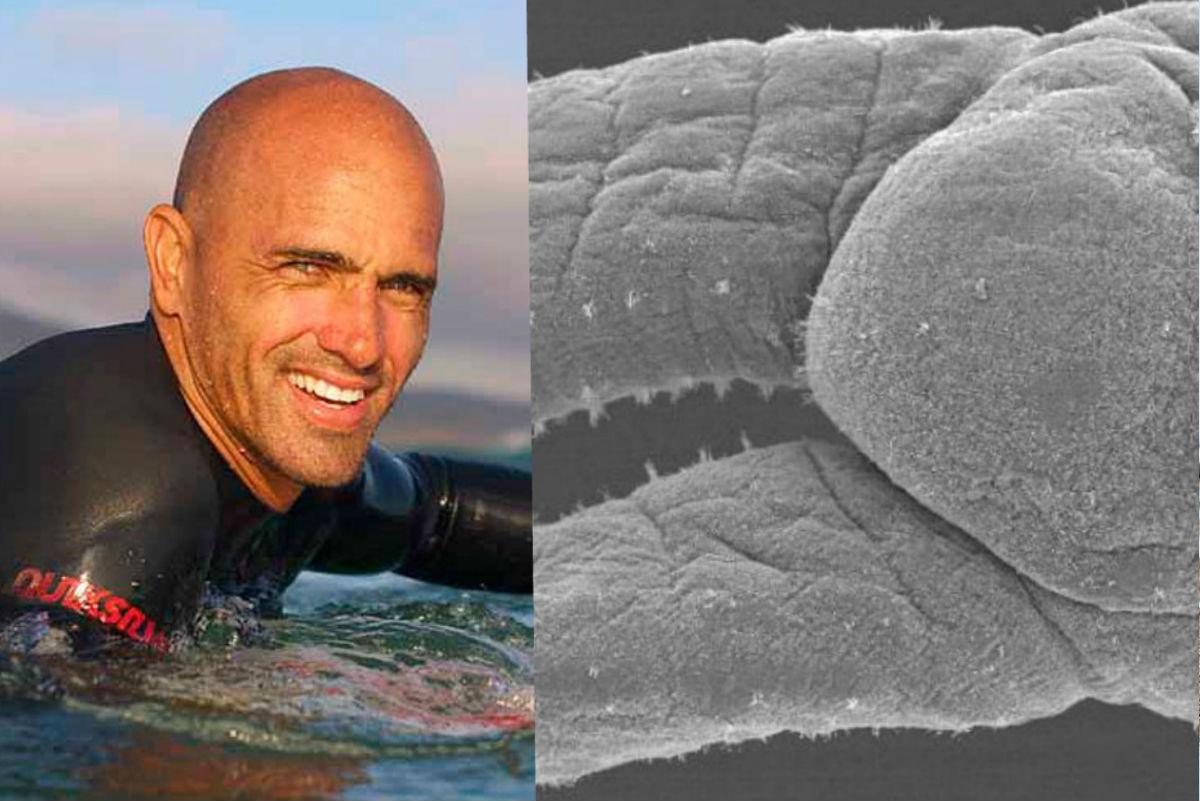 """Científico bautiza a """"gusano surfista"""" con el nombre de Kelly Slater"""